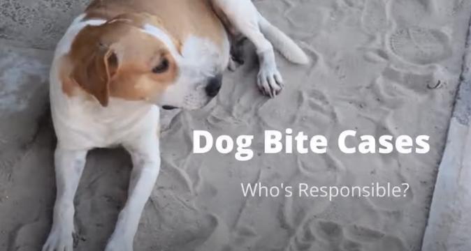 Dog Bite Video